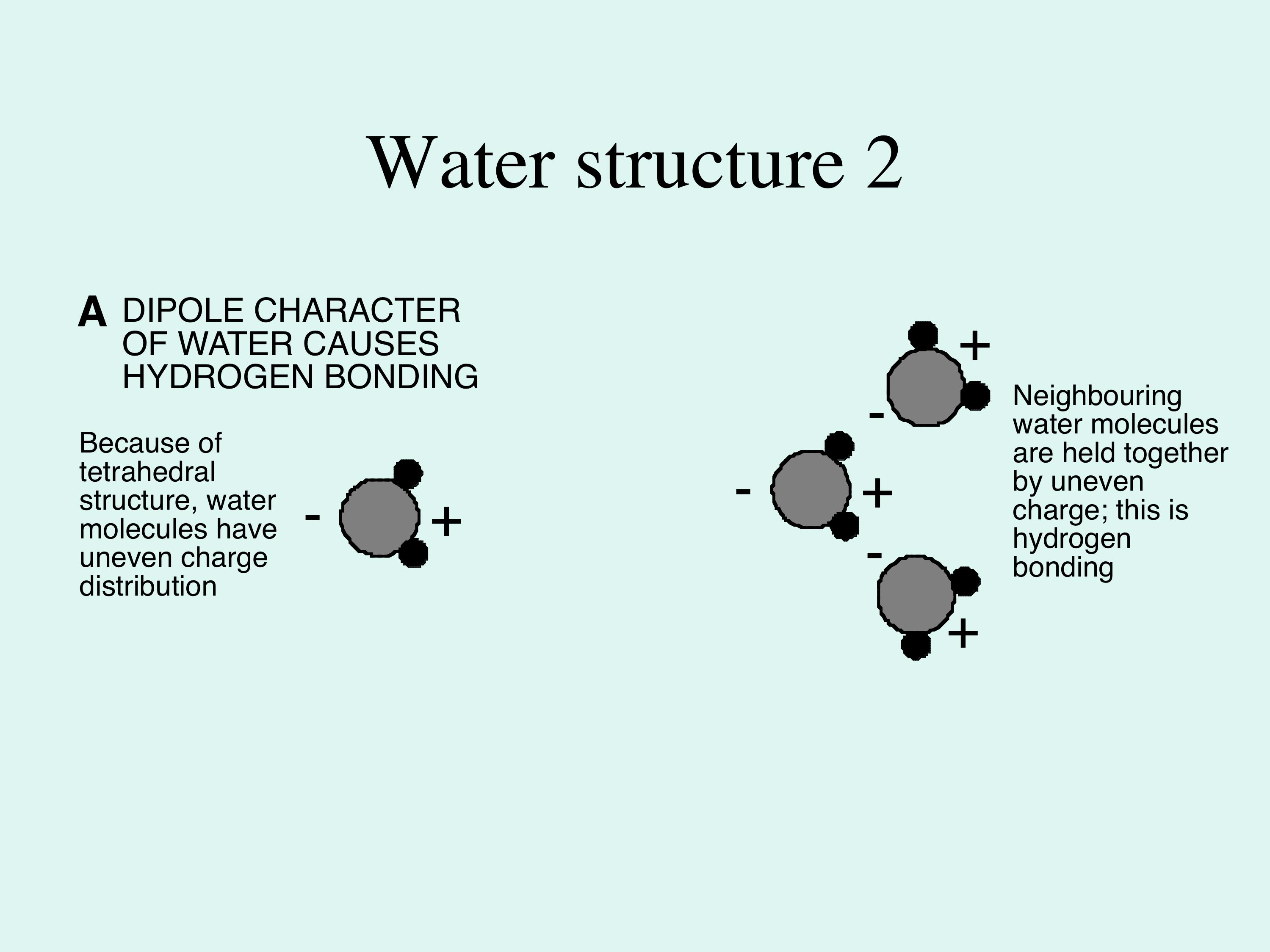 The Hydrogen Bond and the Water Molecule The Physics and