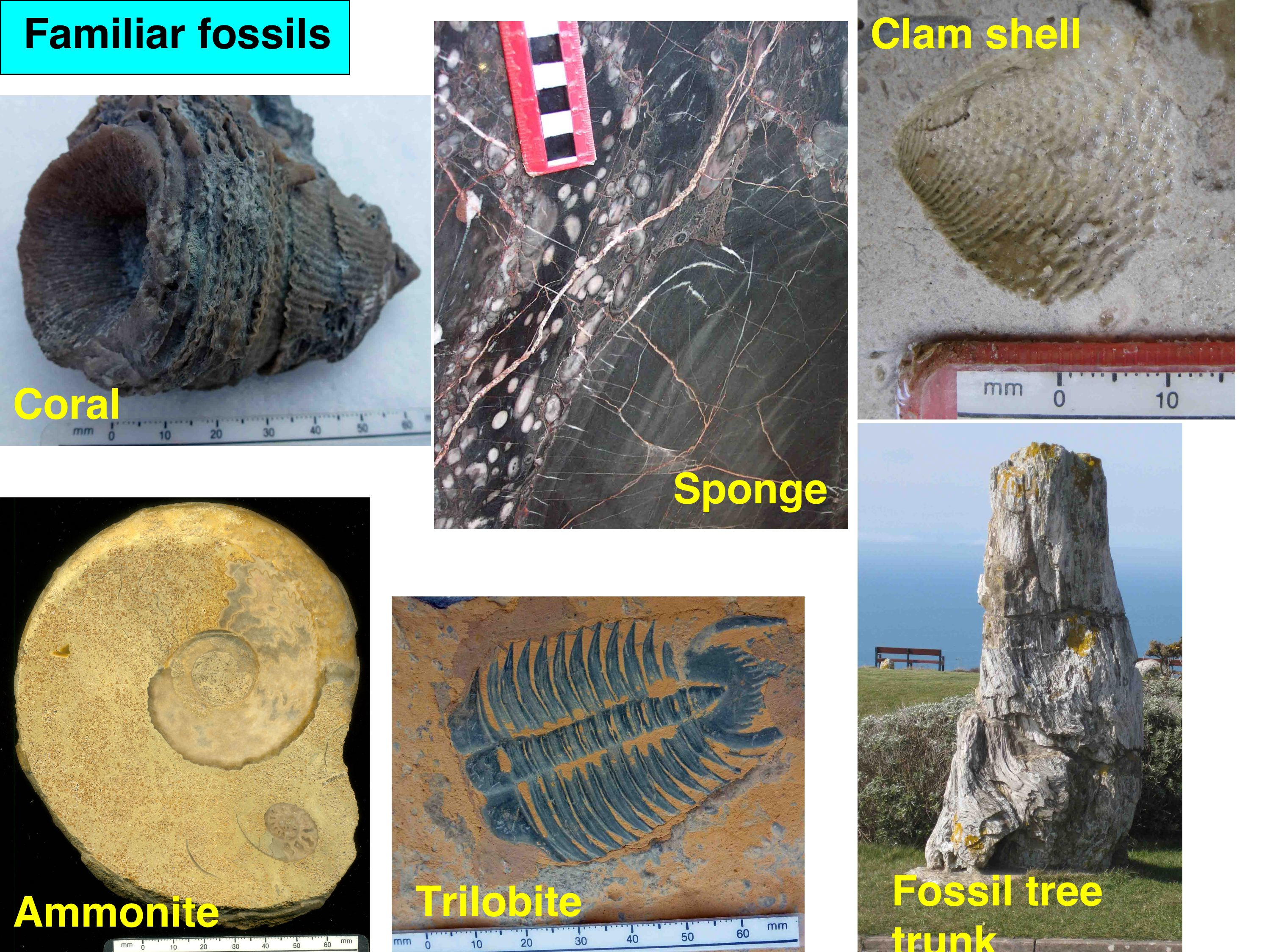 Mass extinctions figure 2 photographs of familiar fossils found in normal earth surface environments not related to extinctions thus these are organisms which may be pooptronica