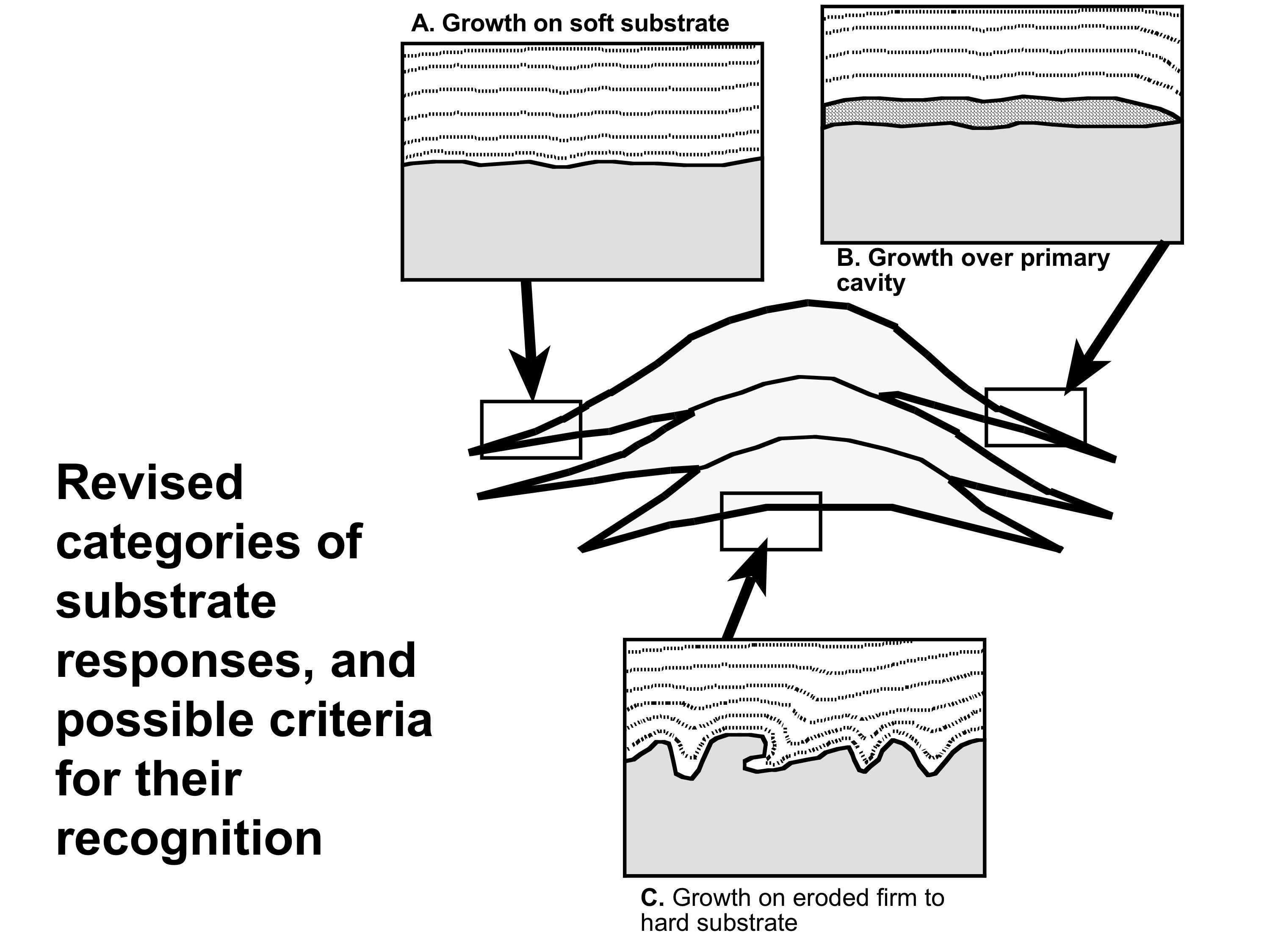 sponge anatomy diagram answer key